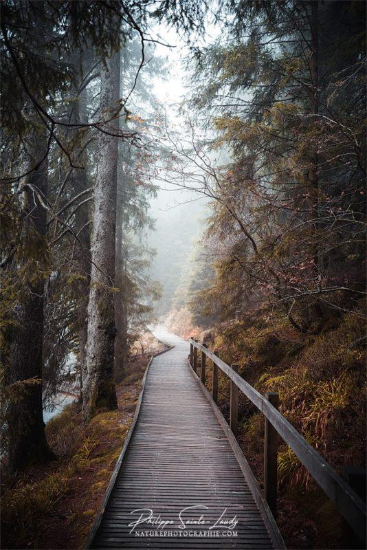 Balade en forêt autour du Mummelsee