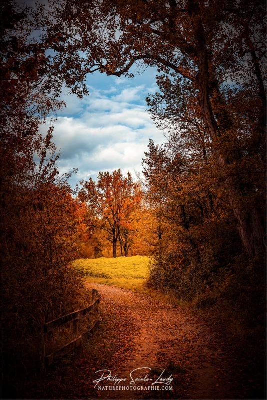 Sentier avec vue sur paysage d'automne