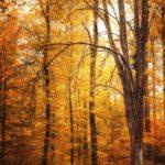 Photo d'automne dans une forêt jaune