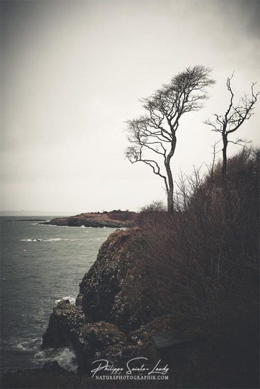 Un arbre dans le vent en Écosse