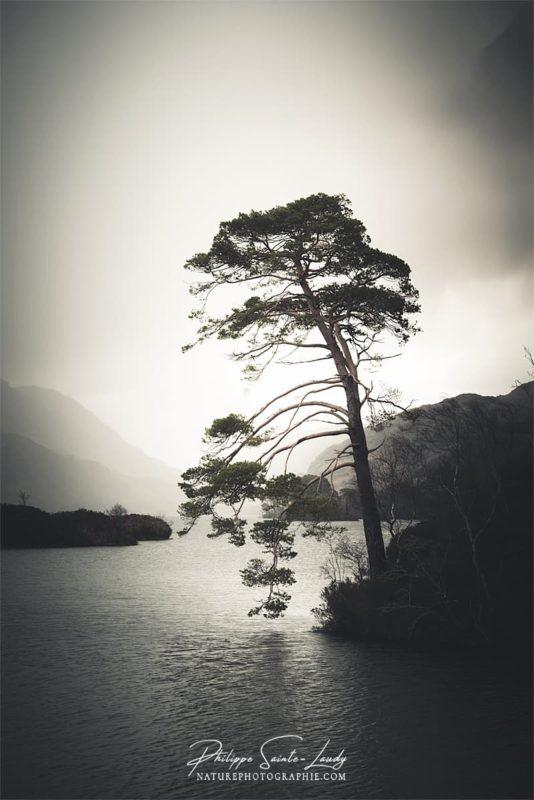 Un arbre en contre-jour sur le Loch Eilt en Écosse