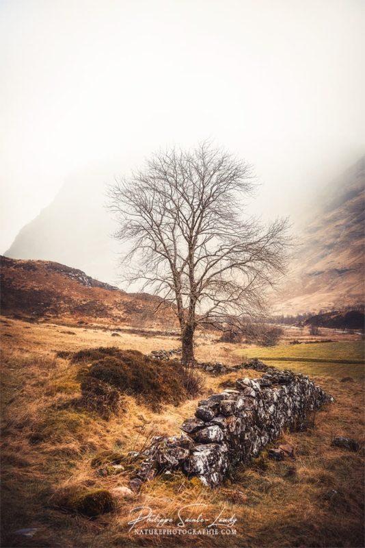 Arbre et muret dans les Highlands en Écosse