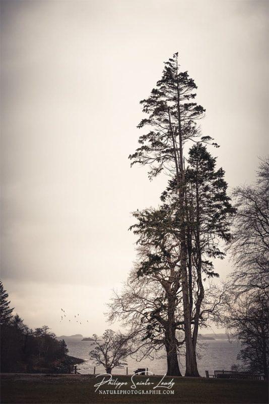 Un arbre droit comme un i