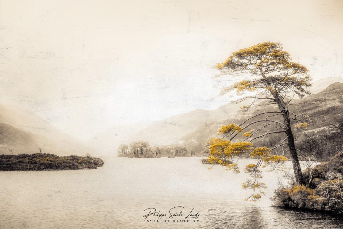 Photo avec texture d'un arbre autour du Loch Eilt