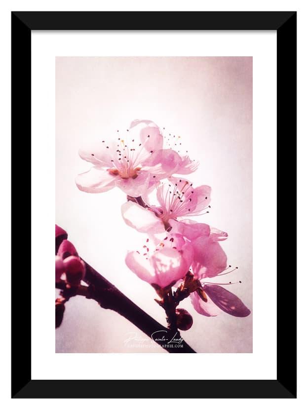 Cadre photo avec des fleurs de pêcher