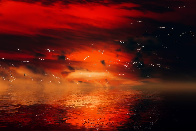 Vol d'oiseaux sur ciel rouge