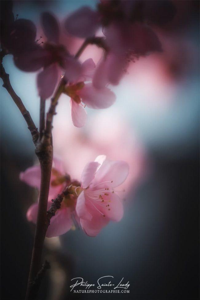 Photo de fleur au printemps