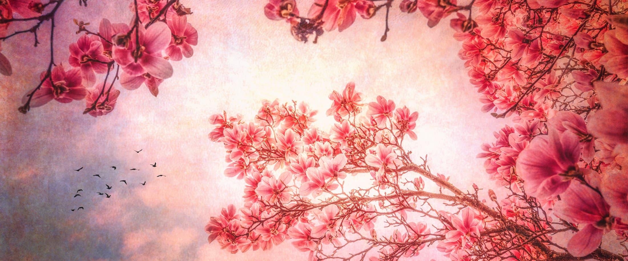 Texture et magnolias