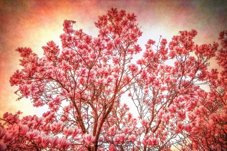 Magnolia sur fond texturé