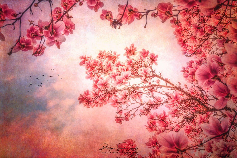 Magnolia sur fond de ciel bleu