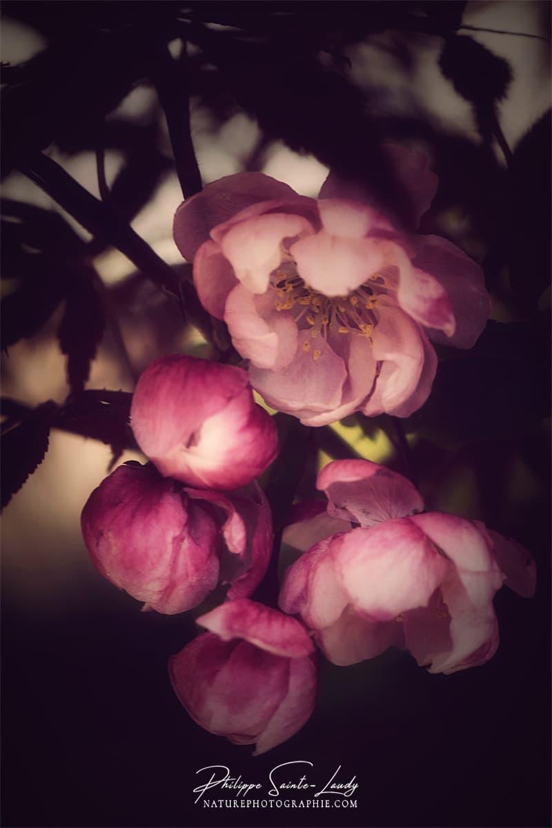 Lumière douce sur une fleur