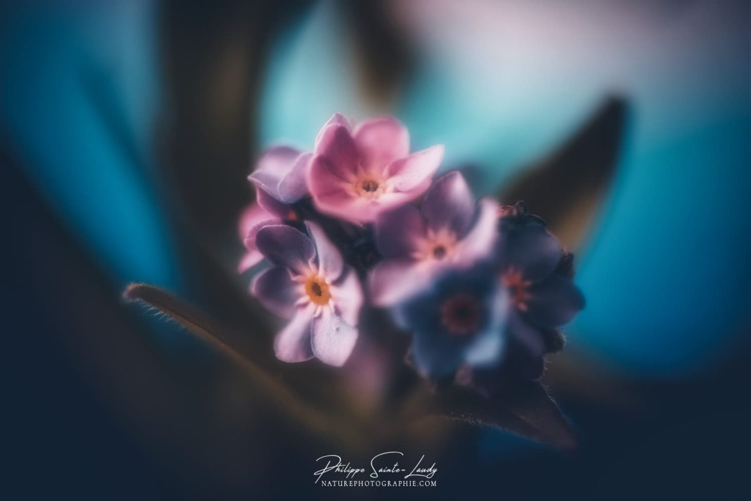 Bouquet de tendresse