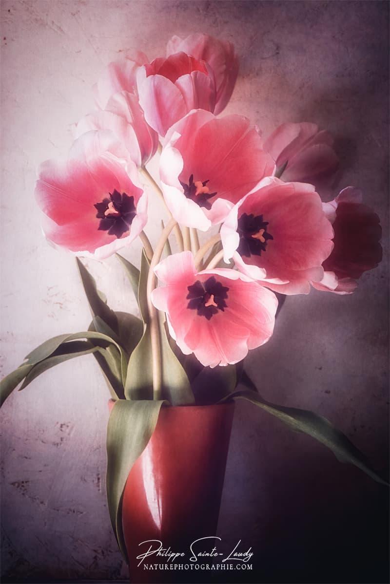 Tulies en bouquet