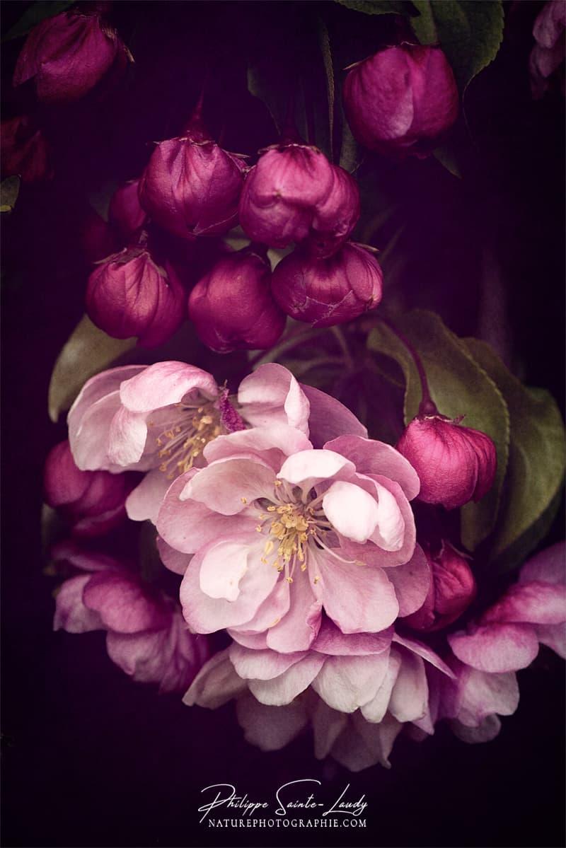Gros plan de fleurs au printemps