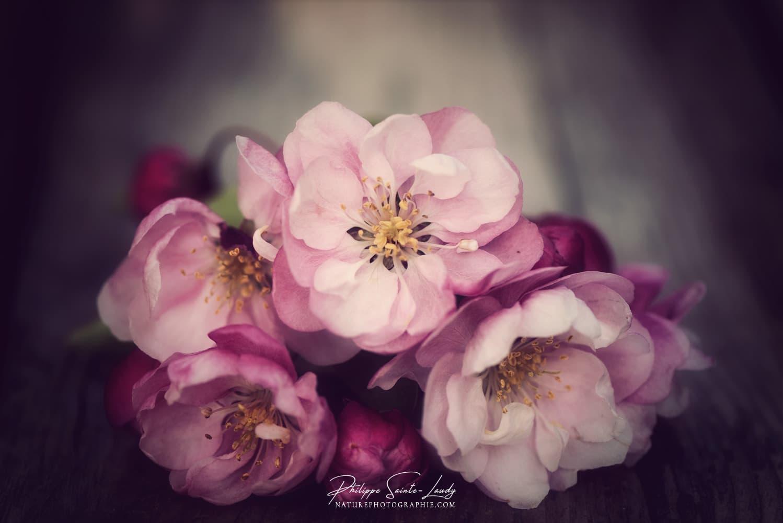 Ambiance nostalgique sur de fleurs