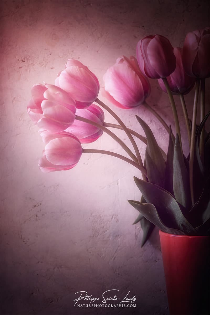 Bouquet de tulipes dans la lumière