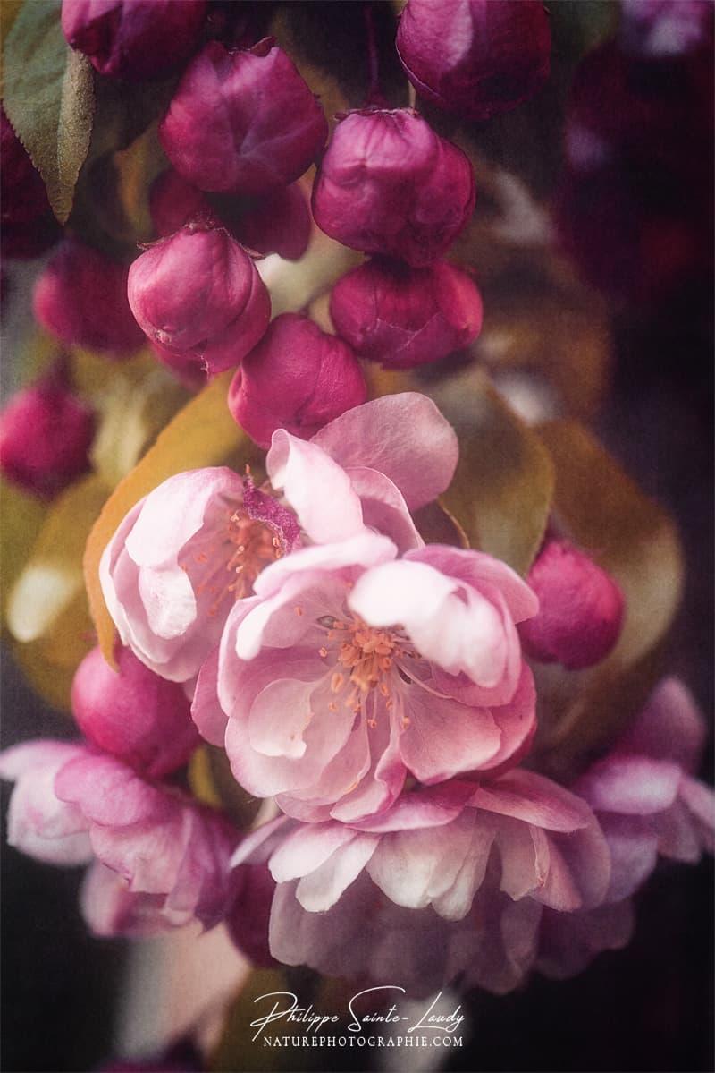 Grappe de fleurs
