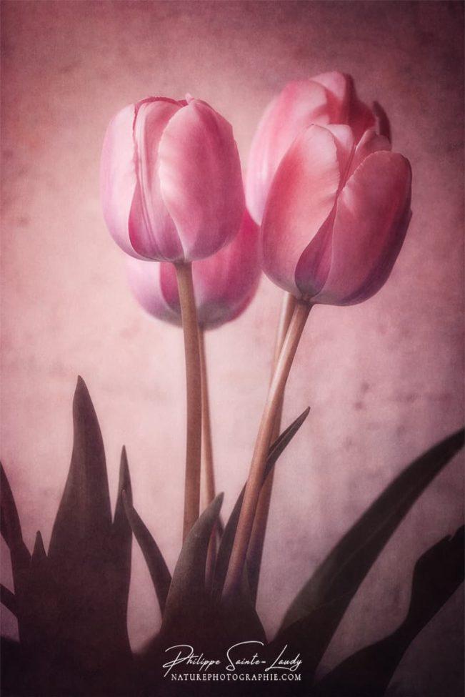 Photo de tulipes avec une texture photo