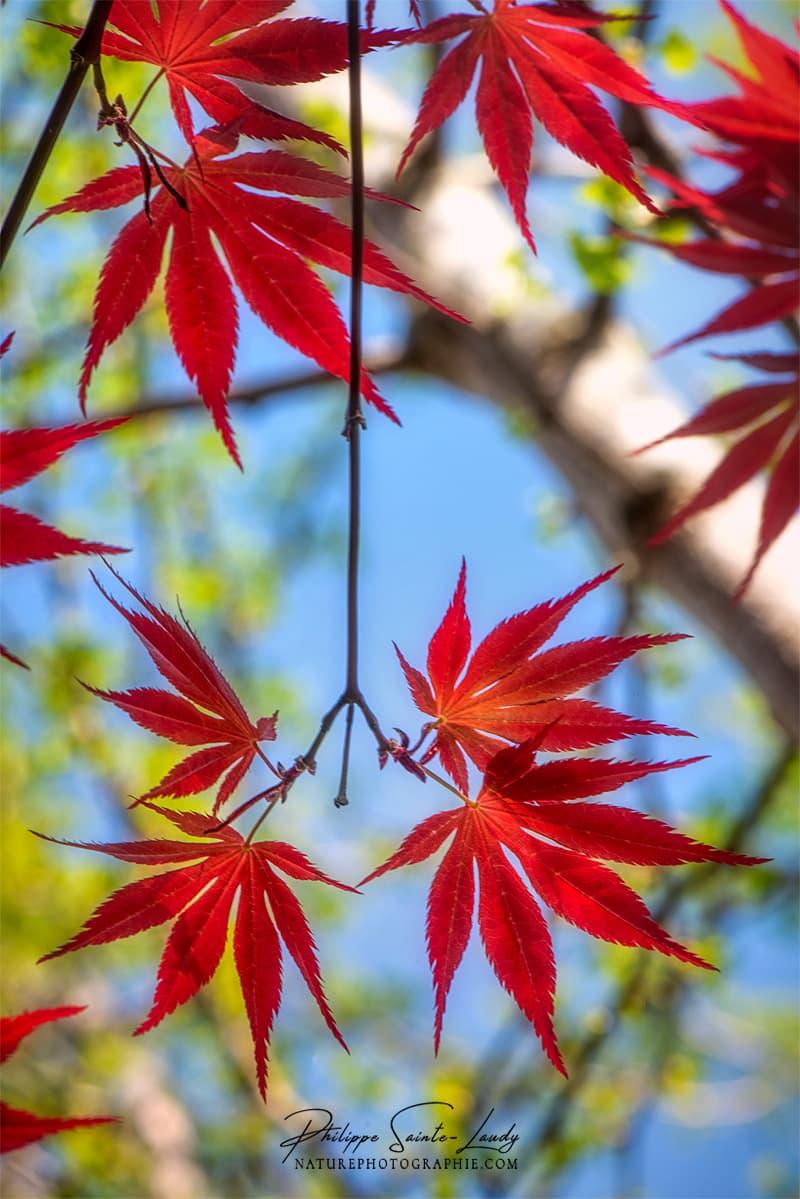Branche verticale avec feuilles rouges