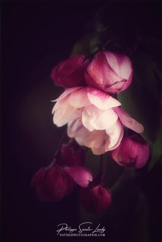 Vignettage prononcé sur des fleurs