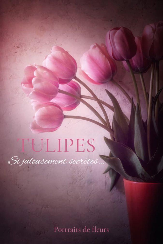 Tulipes en photo