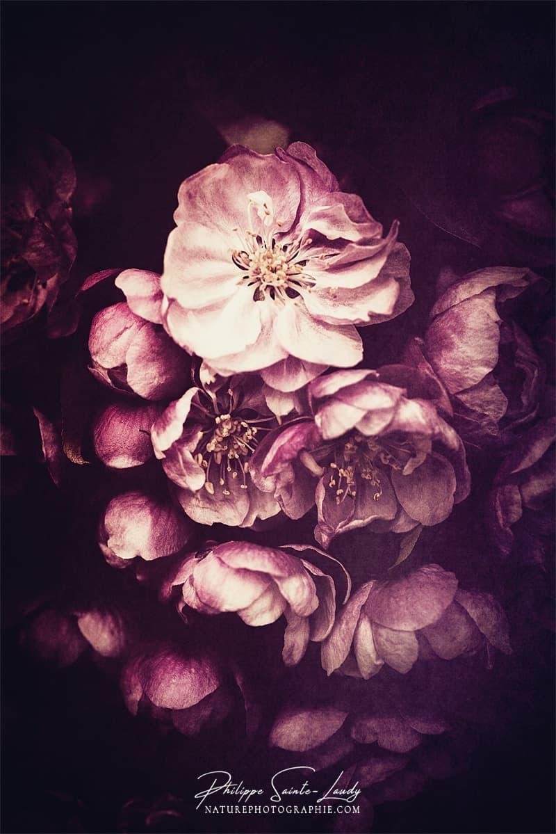 Fleurs nostalgique