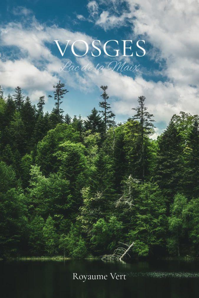 Sapins des Vosges
