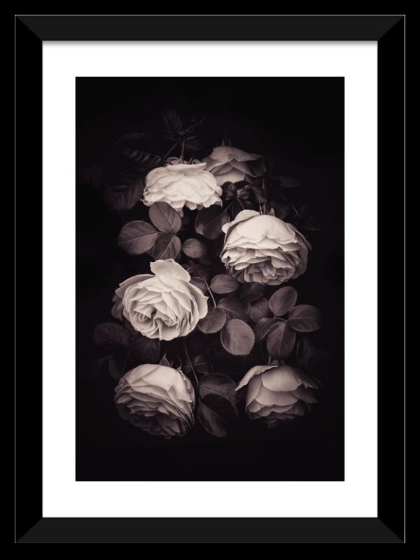 Photo de rose avec un cadre noir