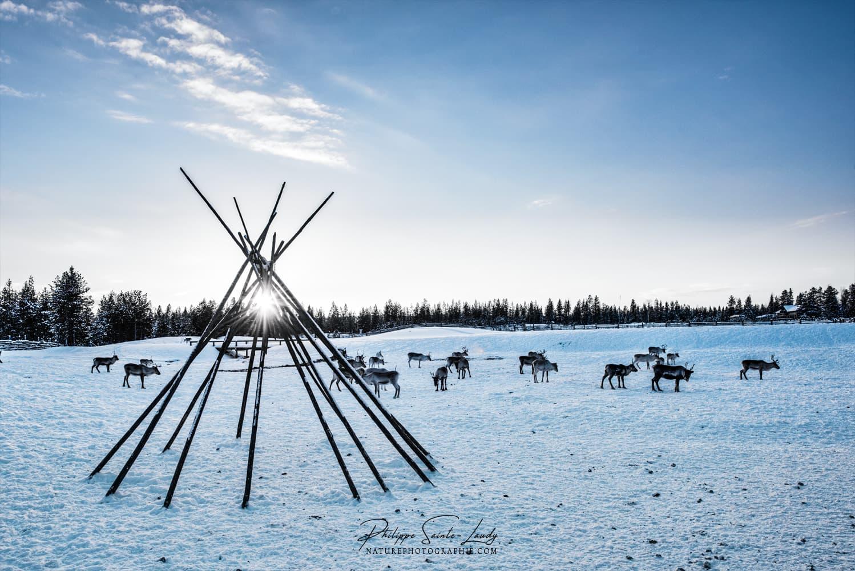 Ferme de rennes en Finlande