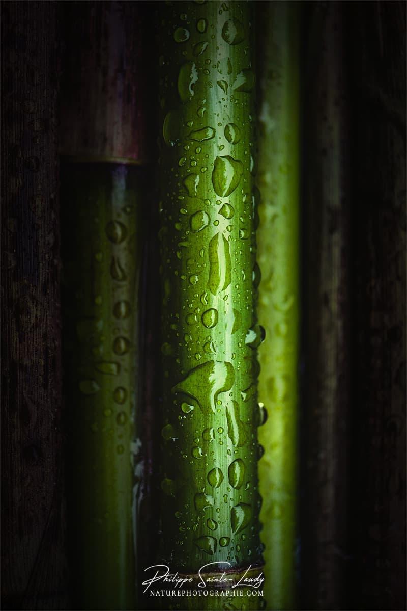 Bambous vert en gros plan