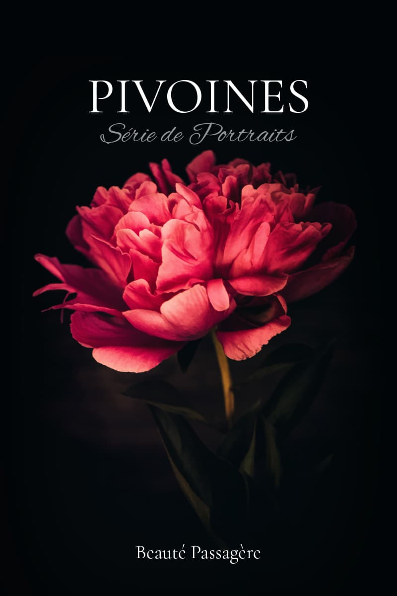 Photographies de pivoines rouges