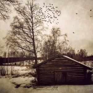 Texture photo sur un paysage de Finlande