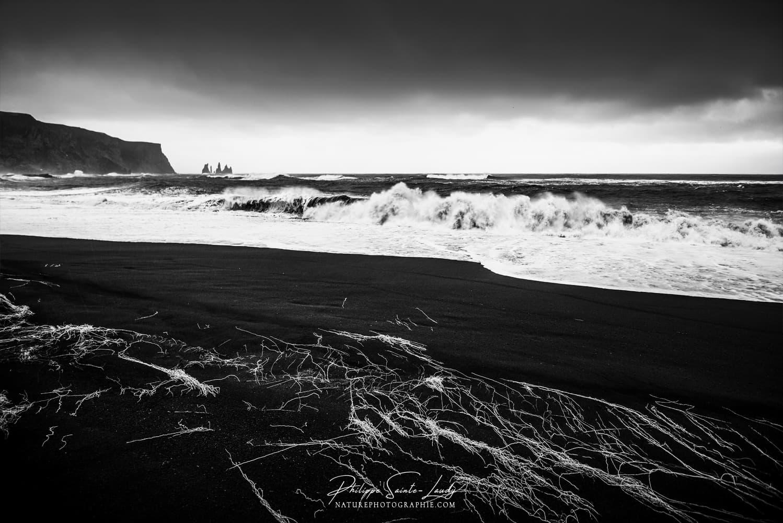 Photos Noir Et Blanc La Galerie Photo De Nature Photographie