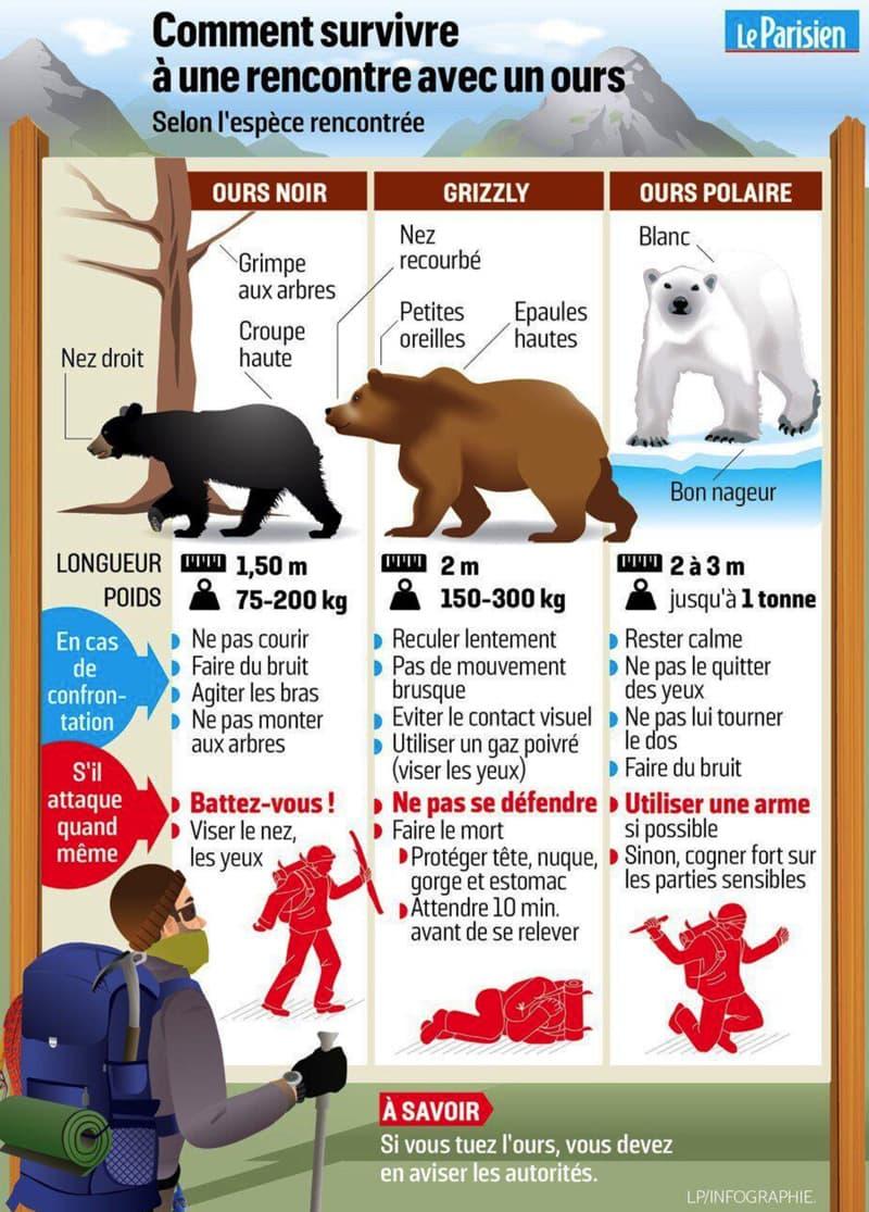 Comment survivre à une rencontre avec un ours