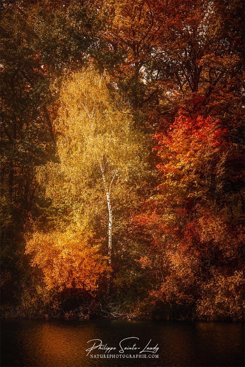 Arbres dans une forêt en automne