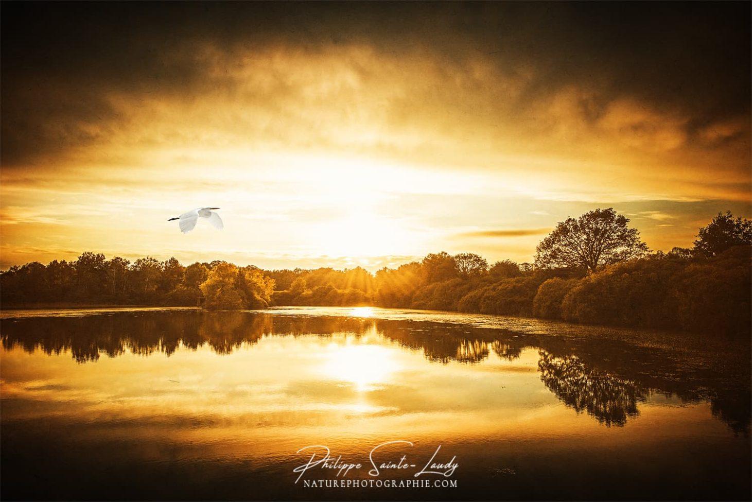Vol de héron dans un paysage d'automne