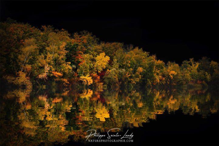 Forêt en automne sur fond de ciel noir