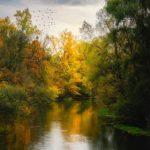 Rivière en automne