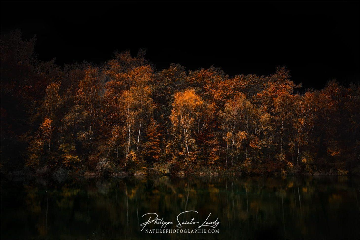Sombre forêt en automne