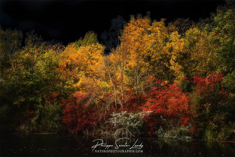 Couleurs d'automne sur fond de ciel noir