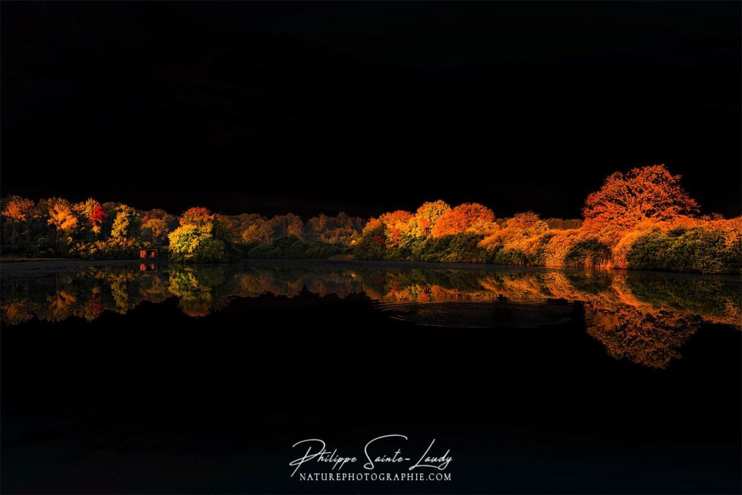 Reflet noir de la nature en automne