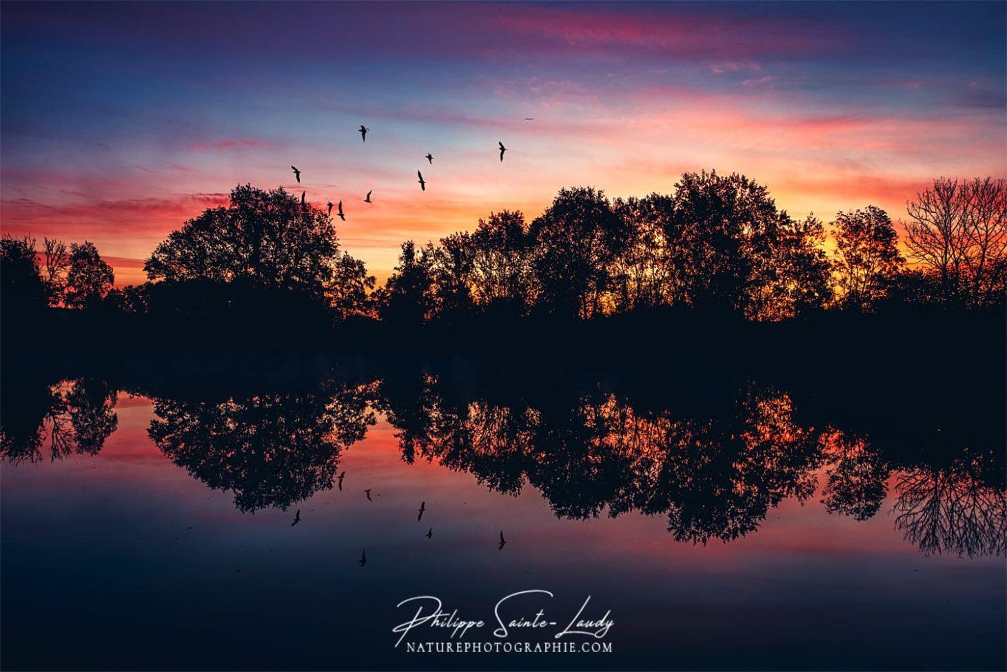Des oiseaux dans le coucher de soleil