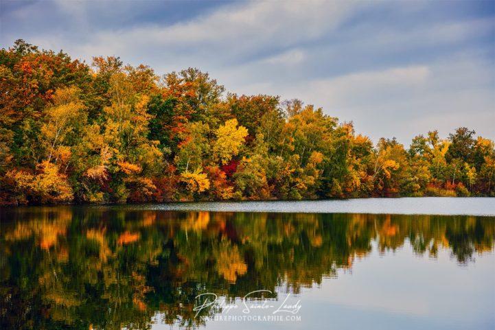 Reflet d'une forêt dans un étang en automne