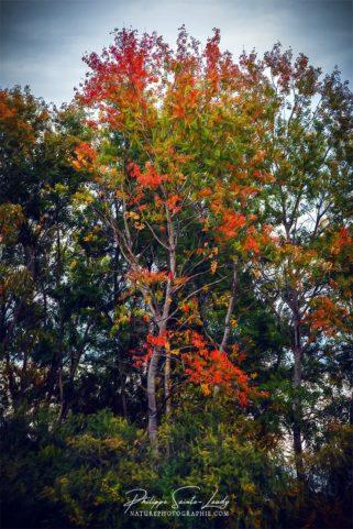 Feuillage d'automne en Lorraine