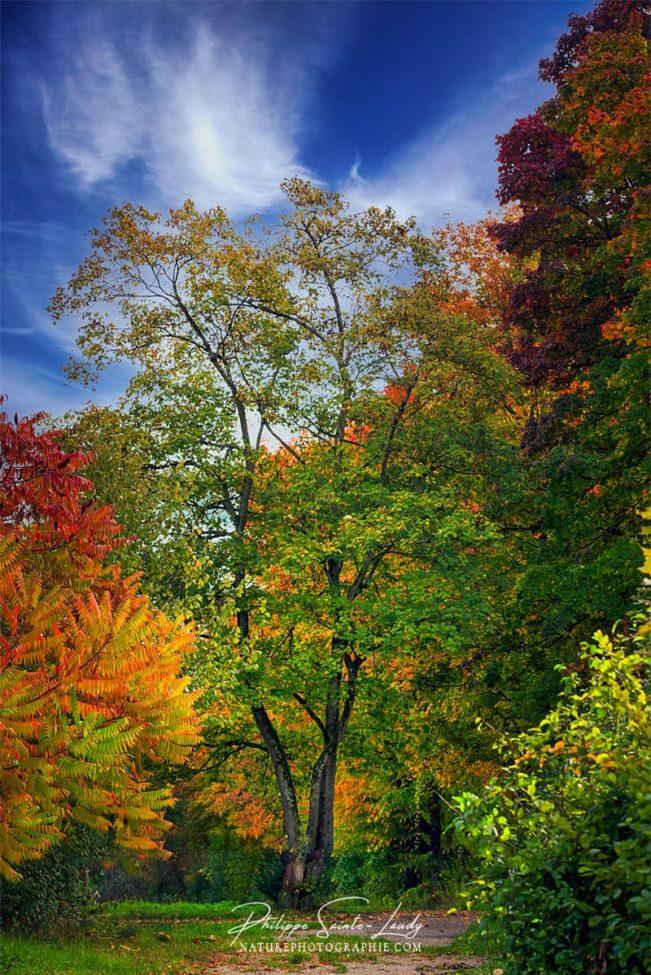Des couleurs d'automne