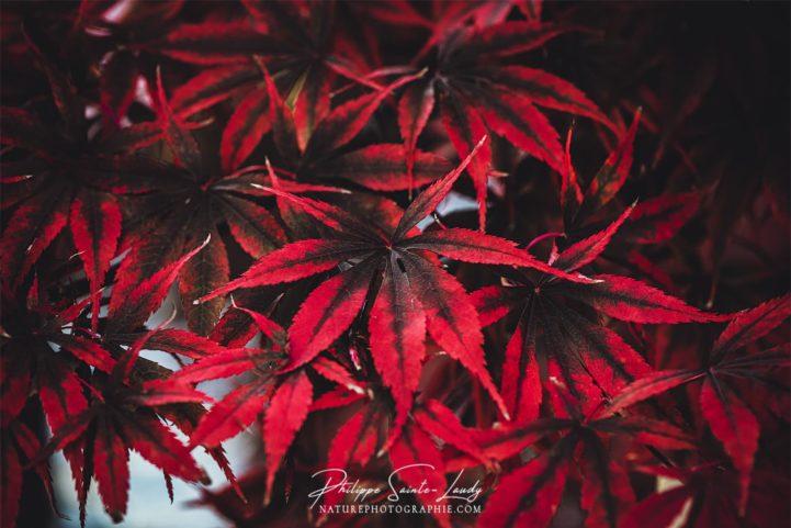 Texture cuir pour ces feuilles d'érable