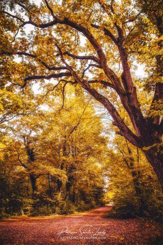 Un chemin dans une forêt en automne