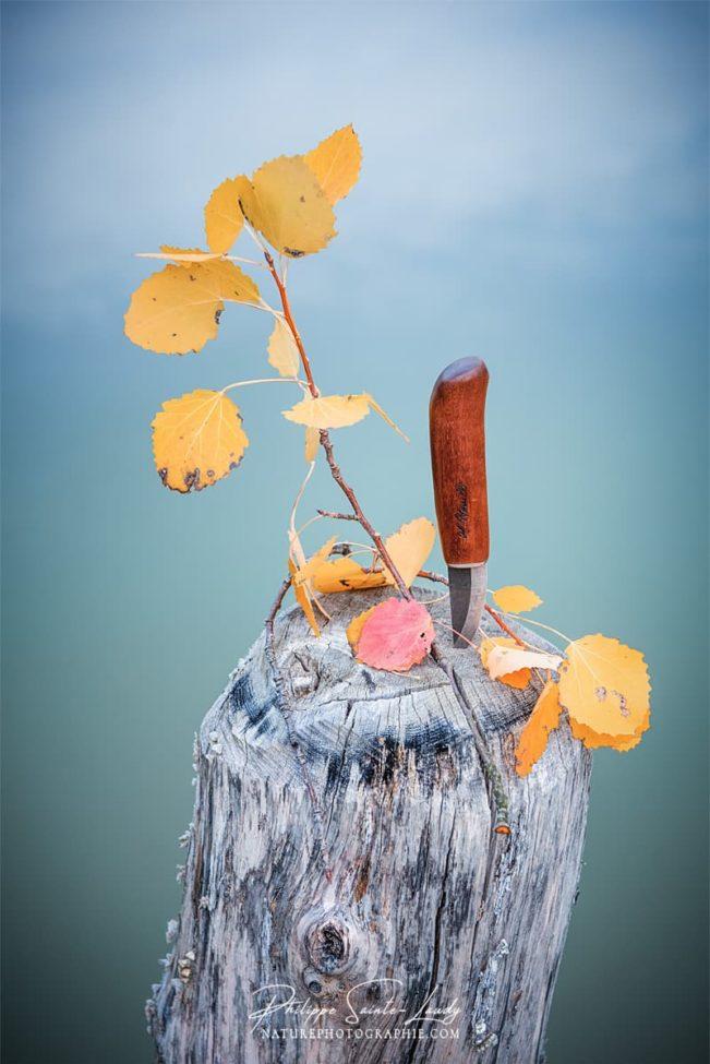 Couteau Roselli en automne