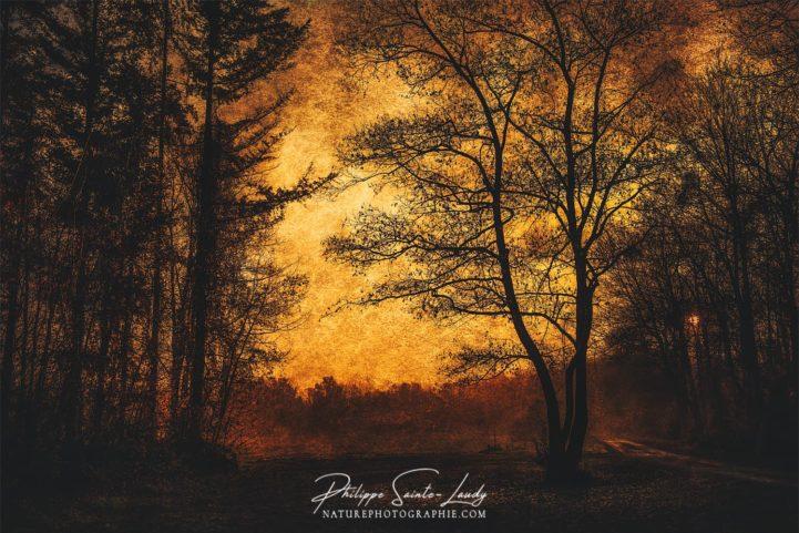 Paysage d'automne avec texture