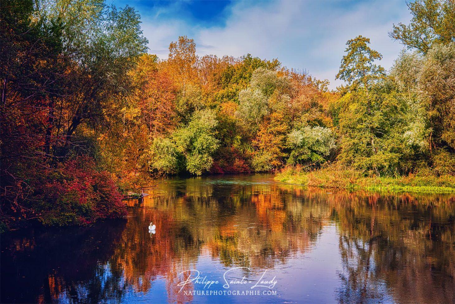 Couleurs de l'automne en forêt